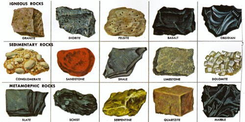 identification guide for common fossils from the cincinnatian of ohio