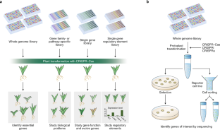 a programmable dual-rna-guided dna endonuclease in adaptive bacterial immunity