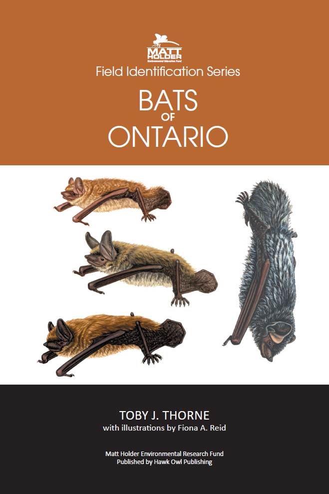 field guide to bats of ontario